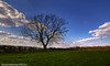 Lonesome Tree - Sudbury Transmitter (Daveyboy_75) Tags: trees tree field suffolk olympus hedge fields sudbury dslr hdr lonelytree hedges lonesometree olympusdslr e450 hedgeline olympuse450 olympuse450dslr sudburytransmitter