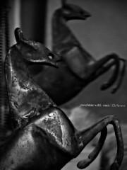 Horses (yusu falaa1) Tags: horses bw house photography photos capturedmoments streamzoo fortheloveofblackandwhite