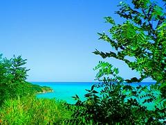Costa Ortonese.  1 (Aldo433) Tags: italy italia mare natura erba colori abruzzo bosco ortona