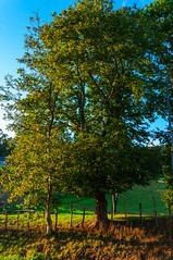sombras (Jose Losada Foto) Tags: naturaleza verde sol nikon rboles jose fotos fotografa d90 losada