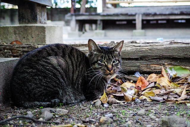 Today's Cat@2013-11-22