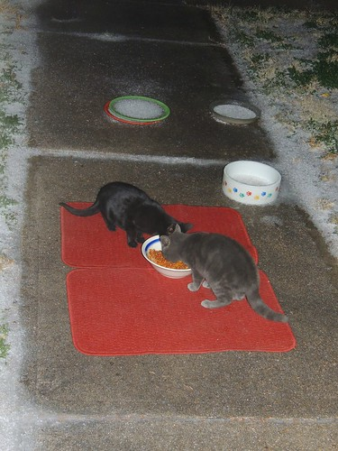 Two strays, getting a late evening meal