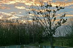 8 12 I3 8h30 (domiloui) Tags: france nature flickr hiver ciel lumiere paysage lorraine campagne arbre couleur fort saisons plantes ambiance nuances documentaire cooliris nomeny abaucourt blinkagain