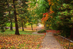 Downhill (surfingstarfish) Tags: autumn trees color green fall nature leaves path laub herbst natur hang steep weg abstieg steil