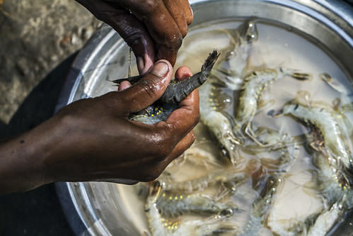 Cleaning shrimps, Khulna, Bangladesh. Photo by Felix Clay/Duckrabbit.