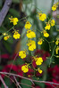 (kuuan) Tags: orchid flower 85mm olympus vietnam mf f2 tet saigon zuiko manualfocus hcmc fzuiko f285mm olympusfzuikoautotf285mm
