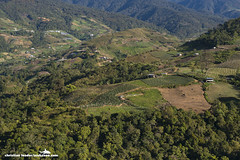 hills, crop fields, forest - Kundasang village - Sabah, Malaysia (Christian Loader) Tags: morning blue mountain green field forest sunrise landscape scenery southeastasia farm hill farming earlymorning scenic vegetable hills crop malaysia borneo vegetation fields mountkinabalu crops growing moutain sabah kundasang scubazoo christianloader scubazooimages