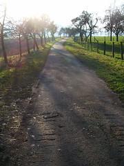 The Old Year's Farewell (amhop27) Tags: trees light shadow sun germany deutschland licht hessen path sonne bume schatten weg meinhard schwebda
