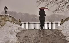 Color Cover (Tim Schreier) Tags: nyc newyorkcity winter storm centralpark manhattan streetphotography icestorm streetphoto newyorkny nycwinter nycstreetphotography nycstreetphoto