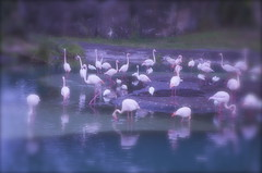 DSC_0216 (luismello) Tags: usa nature beautiful animals zoo nikon disneyland eua d5100