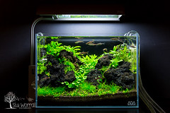 ) Tags: black lava ada stu mini m aquascape tropica aquascaping ...