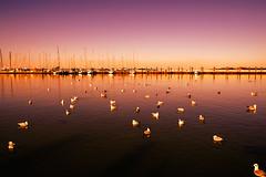 Ultime luci al porto (tampurio) Tags: sunset sea sky italy sun sunlight soleil italia mare sony coucher du barche porto alpha sole acqua venezia gabbiani chioggia veneto slta58