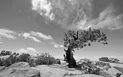 B&W Tree (photo61guy) Tags: utah tree treesubject monochromenature monochrome nikond7000 nature landscape deadhorsestatepark clouds sky bestcapturesaoi elitegalleryaoi wow diamondclassphotographer flickrdiamond