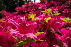 Japanse Tuin Clingendael 2014-02232 (Arie van Tilborg) Tags: japanesegarden denhaag thehague clingendael japansetuin clingendaelestate landgoedclingendael