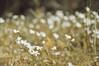 Nature Walk II (Fancy E) Tags: flowers spring penningtonnj