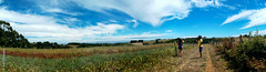 MALALHUE (*paz) Tags: chile summer sky sol nature colors rural free verano surdechile teodoroschmidt malalhue