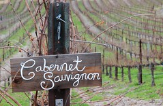 winter vineyard (Karol Franks) Tags: california winter sleeping field vineyard vines wine no country winery rows grapes handcrafted local now temecula dormant cabernet sauvignon vindemiawinery