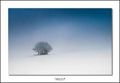 Seul dans le froid (Chris S-B) Tags: tree landscape hiver neige paysage arbre froid