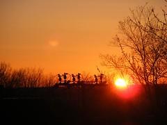 ** Le dernier matin... ** (Impatience_1 (Peu...ou moins prsente)) Tags: sky sun tree sunrise soleil ngc ciel npc greenery arbre verdure leverdesoleil impatience coth supershot fantasticnature abigfave saveearth citrit alittlebeauty coth5 29avril2016 balcondegenevive dmnagementdegenevive genevivemoving