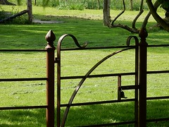 Gate on Green (mikecogh) Tags: green grass gate iron oxford scroll latch
