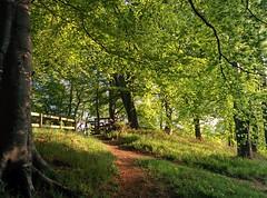 Evening sun (chrisgarv10) Tags: park light shadow sun fence evening scotland ray phone path 5 aberdeen sunrays seaton nexus
