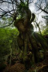 Giant of Irpinia (Luigi Petruzziello) Tags: trees mountain tree green nature forest giant landscape sony faggio beeches montella picentini irpinia forestscape sonya7