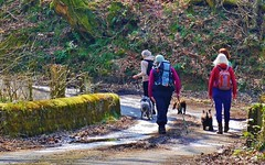 Walkies (hurlham) Tags: dogs countryside lane walkers ramblers