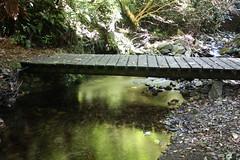 Gunns Bush (ambodavenz) Tags: new bridge water landscape bush stream native south canterbury zealand gunns waimate