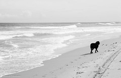 Praia do Flamengo - Bahia/Brasil (AmandaSaldanha) Tags: blackandwhite bw dog love praia beach nature brasil landscape photography natureza pb paisagem cachorro bahia fotografia pretoebranco praiadoflamengo