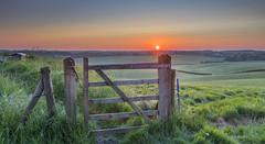 Gateway (nicklucas2) Tags: sun green grass sunrise landscape gate sheep horton barbedwire