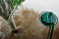 Tree and streetlight dialogue (Luko GR) Tags: seine centennial flood parisfrance cruecentenniale
