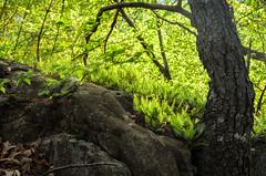 Springtime Greens at Crescent Lake Southington (crmanski) Tags: green landscape spring crescentlake southingtonct