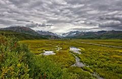 Moody Meadow (Philip Kuntz) Tags: alaska meadow stormy explore marsh richardsonhighway