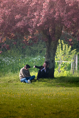 Lovers (richardsolway) Tags: tree park couple lovers girl boy shade sun