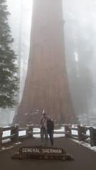 General Sherman's Tree in Sequoia NP