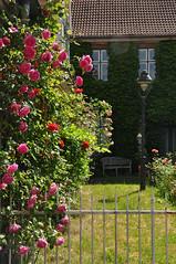 Rosenstadt Eutin (nirak68) Tags: fence deutschland blossom sommer rosen zaun blte heimat ger eutin rosenstadt 163366 stolbergstrase schleswigholsteinkreisostholstein 2016ckarinslinsede schleswigholsteinkreisosthols