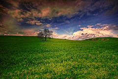 Che ci volete fare! (* landscape photographer *) Tags: sunset italy tree green colors clouds flickr tramonto nuvole valle valley sa sasi nikkor albero colori paesaggio salvo lucania 2016 senise nikond90 landscapephotographer sinni salvyitaly