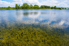 Underwater (Konstantin Bibikov) Tags: blue trees summer lake plant reflection green water algae