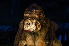 _DSC9544_2 (Elii D.) Tags: light fish flower animal night zoo monkey neon dragons lantern lampion dargon