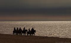 Belgian coast (Natali Antonovich) Tags: sea horses horse reflection beach water silhouette seaside horizon lifestyle horsemen northsea romantic tradition relaxation seashore seasideresort horseman romanticism belgiancoast wenduine seaboard mysticalatmosphere