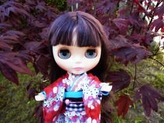 In the Garden 161/366 (Bebopgirl1969) Tags: tree leaves japanesemaple blythe ladycamellia