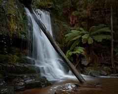 Lilydale Falls. (Ian M's) Tags: waterfall tasmania