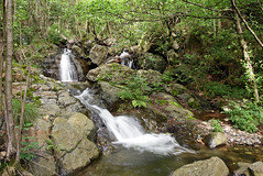 Rio Val di Nass -- Parco Nazionale Val Grande (Vb) Piemonte, Italia (frank28883) Tags: rio piemonte alpi cascate parconazionale valgrande ossola verbanocusioossola premosellochiovenda valleossola
