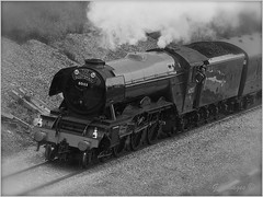 Photo of FLYING SCOTSMAN_AUTHENTIC by Philip Gott (1)