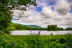The-Resevoir-In-Spring (desouto) Tags: flowers sky nature water clouds stream stones lakes ponds hdr