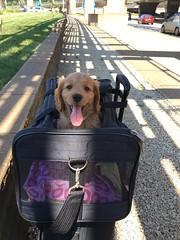 Dakota and Nolan's little girl on her way home!