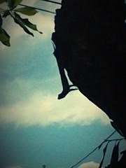 Garrobo (Plape_Amigo) Tags: naturaleza elsalvador reptil garrobo