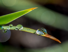 Life. (Omygodtom) Tags: macro nature outdoors star nikon flickr natural nikkor waterdrops tamron d7100 macromonday