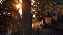 180/366: magical land (Andrea  Alonso) Tags: light sunset sun selfportrait luz sol atardecer ray 365 autorretrato puesta rayos 366