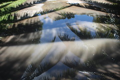 After the rain, Rarotonga (famkefonz) Tags: reflection puddle cookislands rarotonga